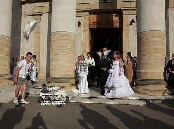Porumbei la nunta Nunta Satu Mare